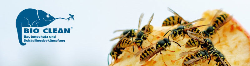 BIO CLEAN - Bautenschutz und Schädlingsbekämpfung